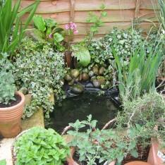 mini-pond