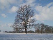 Lubenham fields