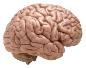 brainz1