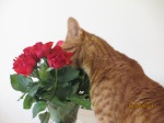 Tom waking up and smelling the roses