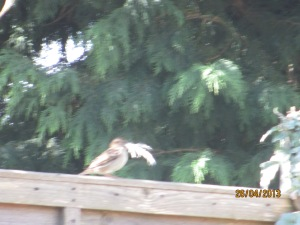 A blurred bird but you get the picture!