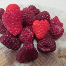Autumn raspberries on Christmas Day