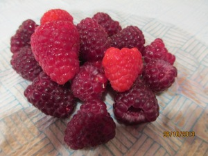 Autumn raspberries-it's almost November!