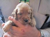 Jasper at 3 weeks