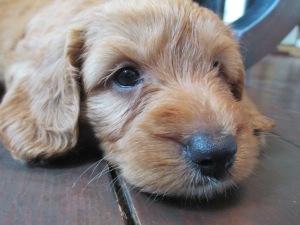 Jasper at 5 weeks