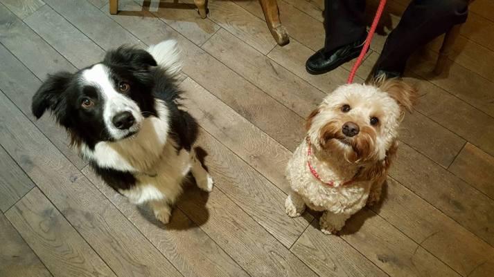 Jasper and Tess