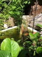 Belfast sink pond