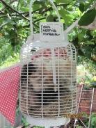 nesting material (dog hair) for next Spring